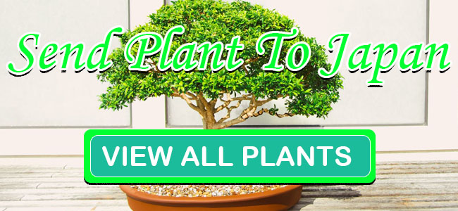 send plants to japan